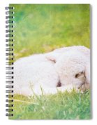 Sleeping Lamb Green Hue Spiral Notebook