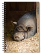 Sleeping Pig Spiral Notebook