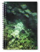 Sleeping Wobbegong And School Of Fish Spiral Notebook