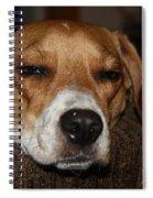Sleepy Beagle Spiral Notebook