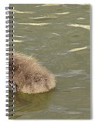 Sleepy Cygnet Spiral Notebook