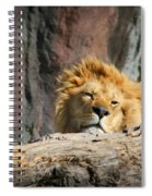 Sleepy Lion Spiral Notebook