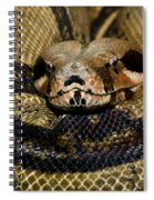 Sleepy Snake Spiral Notebook