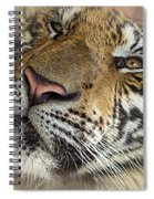 Sleepy Tiger Portrait Spiral Notebook
