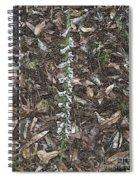 Slender Ladies Tresses Orchids Spiral Notebook