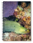 Slithering Moray Spiral Notebook