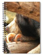Sloth Bear Spiral Notebook