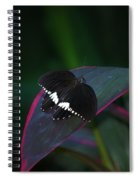 Small Black Butterfly Spiral Notebook