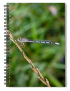 Small Blue Dragonfly Spiral Notebook