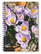 Small Crocus Flower Field Spiral Notebook