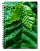 Small Leaves With Water Drops Spiral Notebook