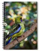 Small Parrot Spiral Notebook