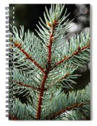 Small Pine Spiral Notebook