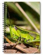 Smaragd-green Grasshopper Spiral Notebook