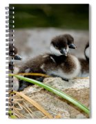 Smew Ducklings On Shore Spiral Notebook