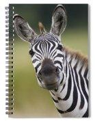 Smiling Burchells Zebra Spiral Notebook