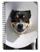 Smiling Dog Spiral Notebook