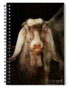 Smiling Egyptian Goat I Spiral Notebook