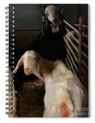 Smiling Goats  Spiral Notebook