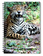 Smiling Jaguar Spiral Notebook
