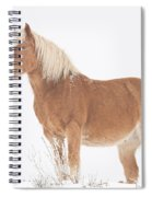 Smiling Palomino In The Snow Spiral Notebook