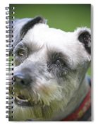 Smiling Schnauzer Spiral Notebook