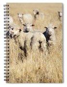 Smiling Sheep Spiral Notebook