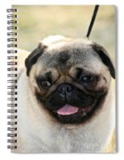 Smug Pug Spiral Notebook
