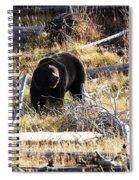 Snacking Bruin Spiral Notebook