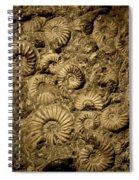 Snail Fossil Spiral Notebook