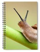 Snail On Green Stem Spiral Notebook
