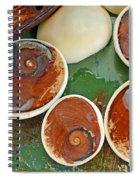 Snail Stones Spiral Notebook