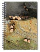 Snails Converge Spiral Notebook