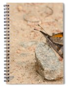 Snout Butterfly  Spiral Notebook