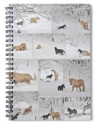 Snow Angels Paso Fino Style Spiral Notebook