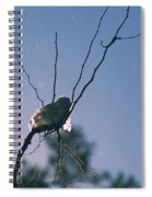 Snow Bird Spiral Notebook