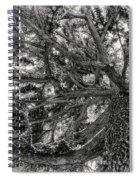 Snow Covered Pine Tree Seen From Below Spiral Notebook