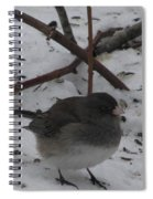 Snow Finch Spiral Notebook