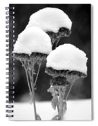 Snow Flowers Bw Spiral Notebook