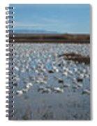 Snow Geese Bosque Spiral Notebook