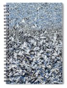 Snow Geese Flock In Flight Spiral Notebook