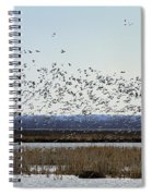 Snow Geese Taking Off At  Loess Bluffs National Wildlife Refuge Spiral Notebook