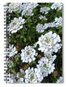 Snow In Summer Spiral Notebook