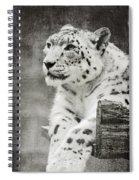 Snow Leopard 2 Spiral Notebook