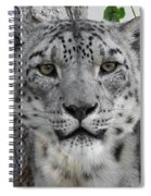 Snow Leopard 5 Spiral Notebook