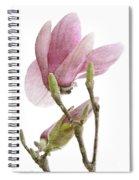 Snow Magnolia Painterly 1 Spiral Notebook