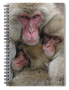 Snow Monkey And Young Spiral Notebook