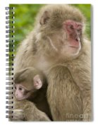 Snow Monkeys, Mother With Her Baby Spiral Notebook