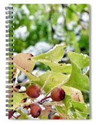 Snow On Green Leaves With Red Berries Spiral Notebook