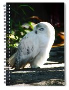 Snow Owl  Spiral Notebook